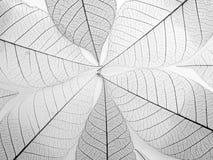 Skeleton leaf background, close up. Stock Images