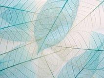Skeleton leaf background, close up. Royalty Free Stock Photo