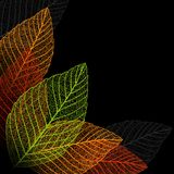 Skeleton leaf background. Stock Images