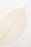 Skeleton leaf. Blown skeleton leaf on handmade rice paper Stock Image