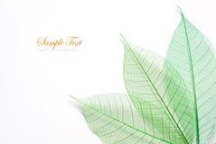 Skeleton leafs seamless Royalty Free Stock Image