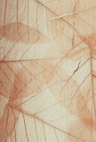 Skeleton leaves background stock photography