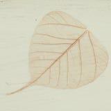 Skeleton leaves background Royalty Free Stock Photo