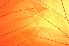 Skeleton leaves background Royalty Free Stock Photography