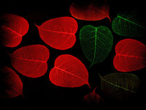 Skeleton Leaves   Composition on black background. An elegant floral collage from the veins (skeletons) of leaves Royalty Free Stock Photos