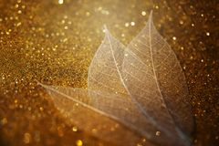 Skeleton leaves on a gold beautiful background. Artistic Macro Photography royalty free stock image