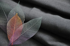 Skeleton Leaves in Heart Shape Royalty Free Stock Photos