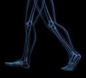 Skeleton legs Royalty Free Stock Photos