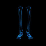 Skeleton legs Royalty Free Stock Photography