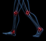 Skeleton of legs walking Stock Images