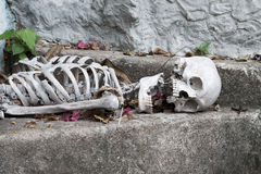 Skeleton lying in   Halloween Royalty Free Stock Images