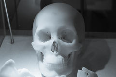 Skeleton made of resin. In the hospital royalty free stock photo