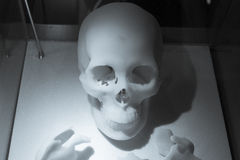 Skeleton made of resin. At the hospital royalty free stock photography
