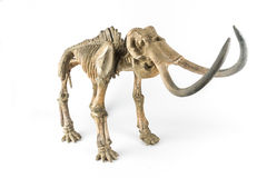 Skeleton of a mammoth. Decorative skeleton of a mammoth on the white background stock photo