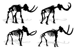 Skeleton of mammoth. Royalty Free Stock Photography