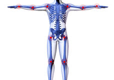 Skeleton of the man. With the centres of pains of joints. 3D the image of a man's skeleton under a transparent skin Royalty Free Stock Image