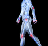 Skeleton of the man. With the centres of pains of joints. 3D the image of a man's skeleton under a transparent skin Royalty Free Stock Photos