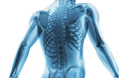 Skeleton of the man. 3D the image of a man's skeleton under a transparent skin Royalty Free Stock Photo