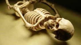 Skeleton Mini Model. Miniature Human Skeleton Model Close Up stock video footage