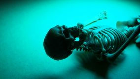 Skeleton Mini Model. Miniature Human Skeleton Model Close Up stock footage