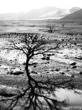 Skeleton. Namib Naukluft Park landscape at sunset, Sesriem, Namibia Stock Photo