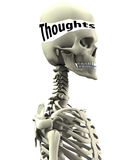 Skeleton With Open Thoughts. Skeleton with its skull opened up with thoughts inside Royalty Free Stock Images