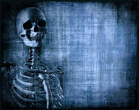 Skeleton Parchment Stock Photo