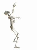 Skeleton pointing at copy space. Isolated skeleton standing looking up pointing at white copy space Royalty Free Stock Images