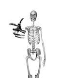 Skeleton Pointing royalty free stock photos