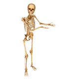 Skeleton pointing towards blank Stock Images