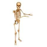 Skeleton pointing towards blank. 3d art illustration of Skeleton pointing towards blank Stock Images