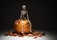 Skeleton With Pumpkin & Leaves royalty free stock photo