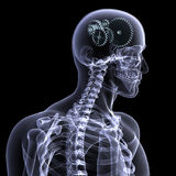 Skeleton Röntgenstrahl - Räder eine Kurve Stockfotos