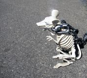 Skeleton rat on chain Royalty Free Stock Photo