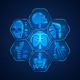 Skeleton x ray. Concept of science technology advancement, graphic of body scan with skeleton x-ray Stock Photography