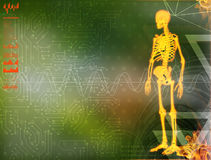 Skeleton by X-rays on backgroun. 3d illustration of  walking fire skeleton by X-rays on background Royalty Free Stock Image