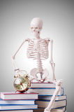 Skeleton reading books against gradient Stock Photo