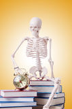 Skeleton reading books against gradient Stock Photos