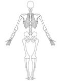 Skeleton: Rear View Stock Photography