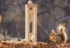 Skeleton and red squirrel with guillotine. Skeleton and red squirrel with a guillotine Royalty Free Stock Images