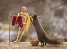 Skeleton and squirrel with washing line Royalty Free Stock Images
