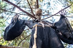 Halloween skeleton hanging on a tree stock photo