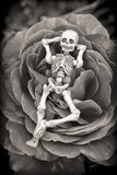 Skeleton Rose Stock Photo