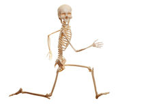 Skeleton running isolated on the white background. Looking at camera stock images