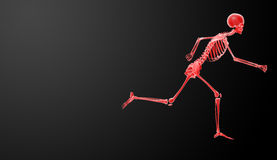 Skeleton Stock Photography