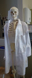Skeleton in science lab. Up right skeleton wearing white lab coat in science lab Royalty Free Stock Photography