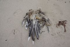 Skeleton of a seagull. On the beach Royalty Free Stock Photos