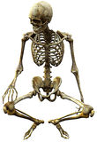 Skeleton seated. In biology, a skeleton is a rigid framework that provides structure as well as protection in humans. This image is excellent for biology science Royalty Free Stock Photo