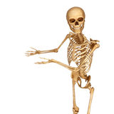 Skeleton showing a blank space Royalty Free Stock Photography
