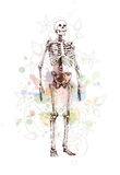 Skeleton sketch & floral calligraphy ornament Stock Photography